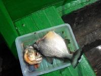 vissen3